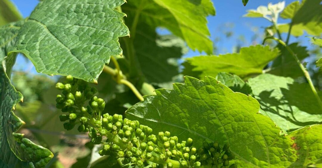 Alentejo wines