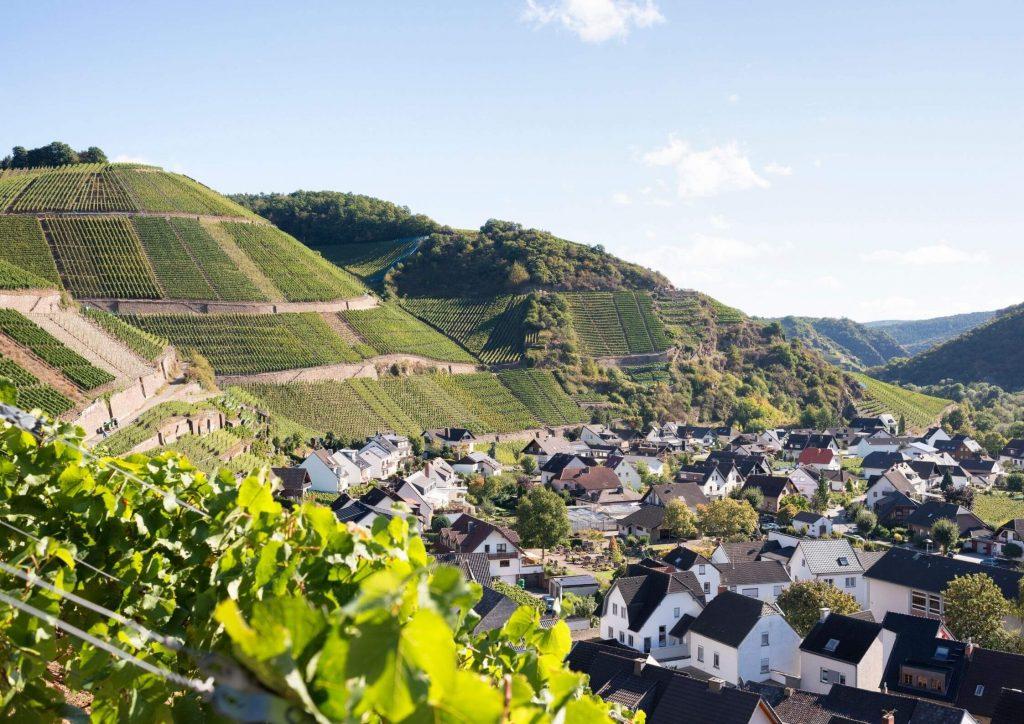 ahr wine region